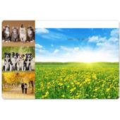 Hochzeitsmagnet Collage vier Fotos 10,16 x 15,24 cm